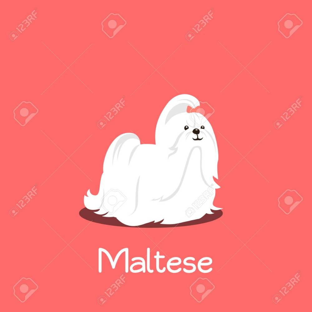 medium resolution of an illustration depicting a cute maltese dog cartoon vector stock vector 81879630