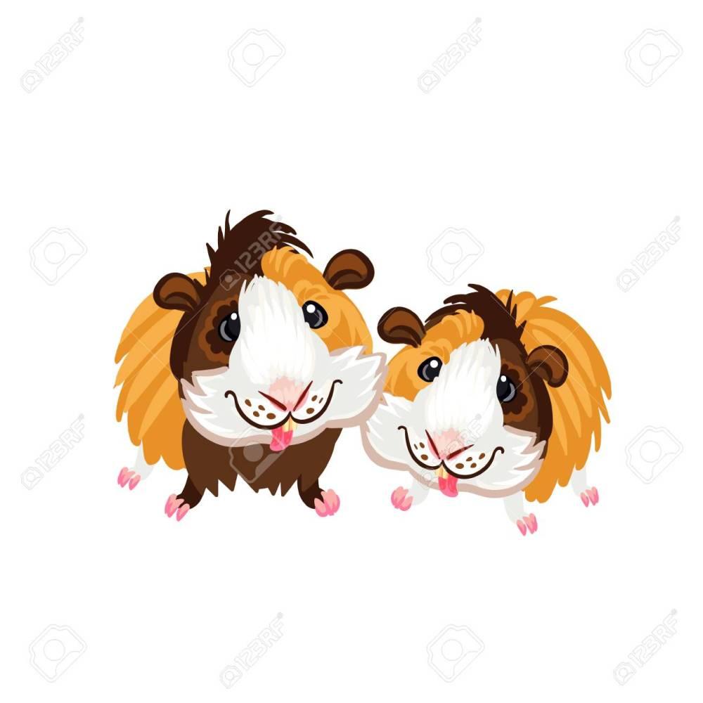 medium resolution of guinea pig little cute homemade cartoon fun art piggy clipart stock vector 102210359