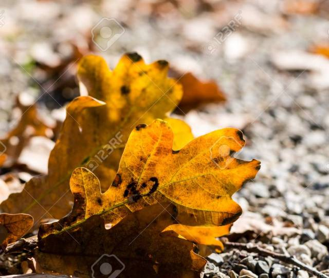 Random Leafs On A Soil In Fall Colorful Nature In A Fall Stock Photo