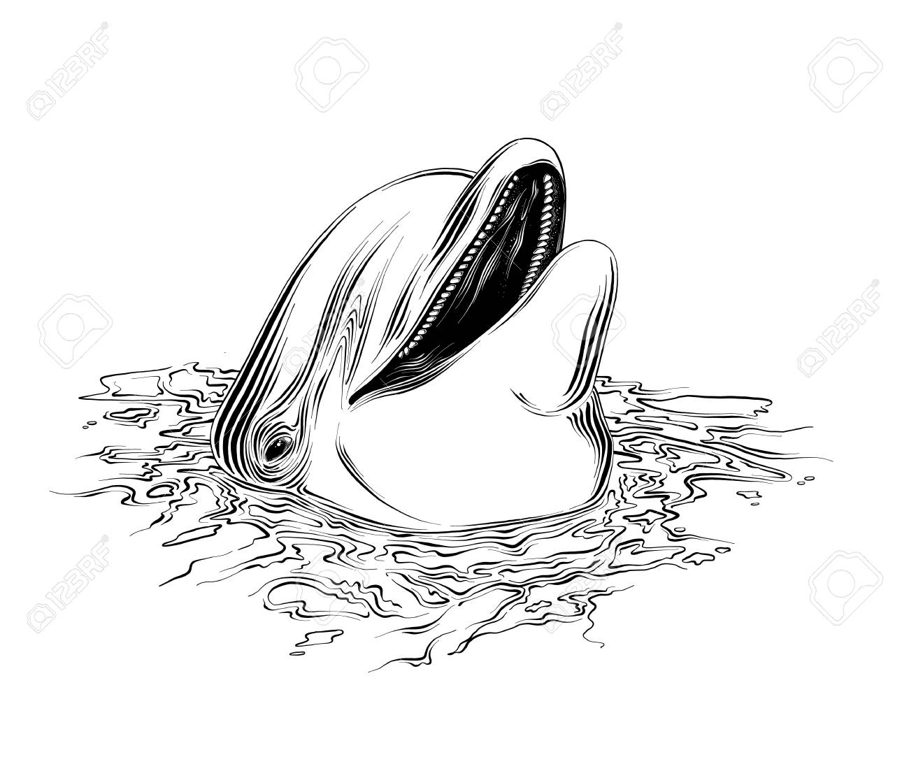 Vector Drawing Of Dolphin In Black Color Isolated On White Background Royalty Free Cliparts Vectors And Stock Illustration Image 121873313