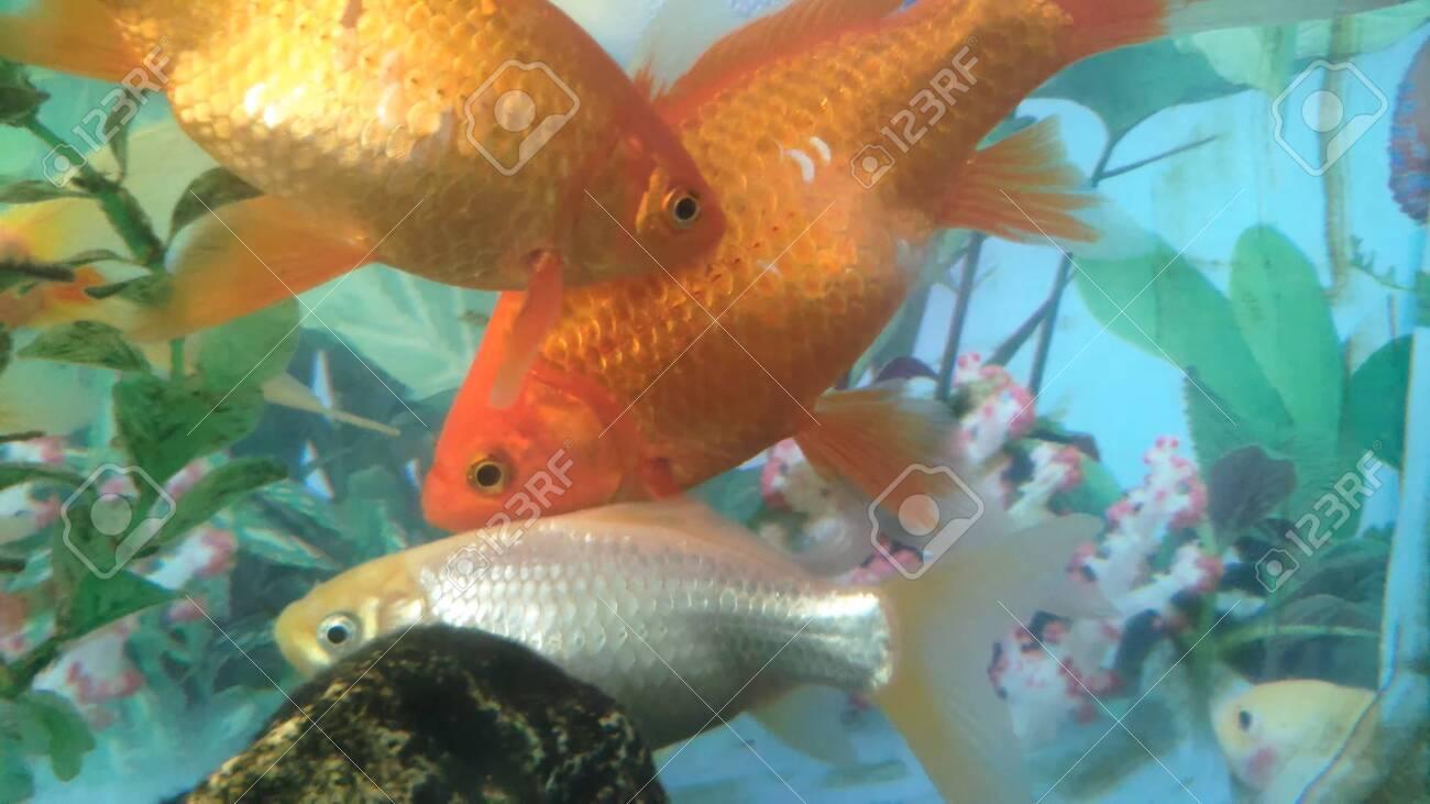 home aquarium and freshwater