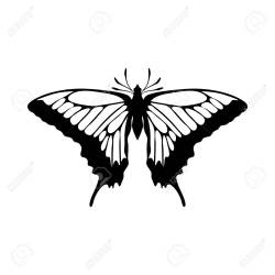 Sketch Of Butterfly Outline Design Vector Illustration Royalty Free Cliparts Vectors And Stock Illustration Image 125157756