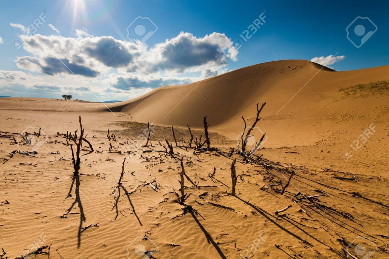 dead desert landscape gobi