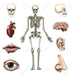 human biology anatomy illustration skull skeleton lips ear nose  [ 1300 x 1300 Pixel ]