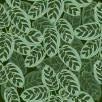 Seamless Pattern Of Ctenanthe Burle Marxii Leaves Fishbone Royalty Free Cliparts Vectors And Stock Illustration Image 147961817
