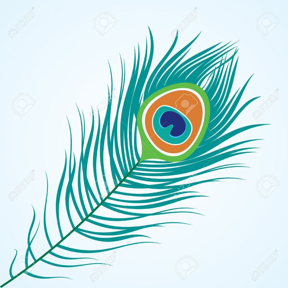 medium resolution of vector vector isolated peacock feather