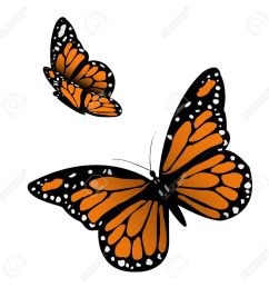 monarch butterfly illustration stock vector 17911730 [ 1300 x 1300 Pixel ]