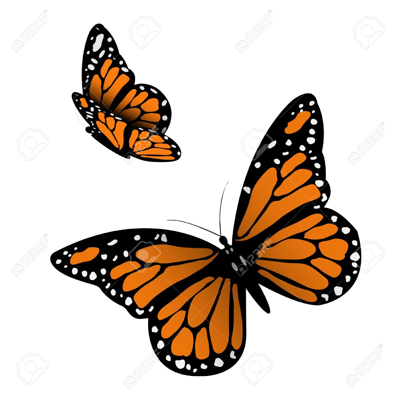 hight resolution of monarch butterfly illustration stock vector 17911730