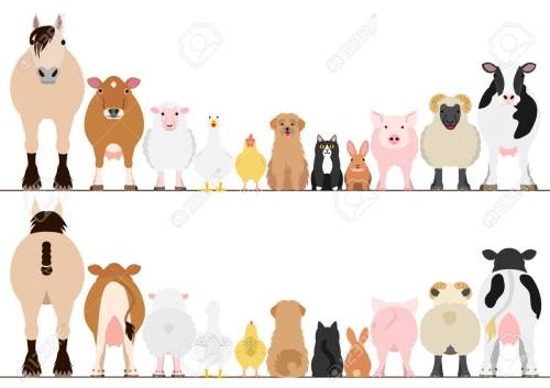 small resolution of farm animals border set front view and rear view stock vector 69224152