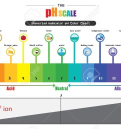 the ph scale universal indicator ph color chart diagram acidic alkaline values common substances vector illustration [ 1300 x 805 Pixel ]
