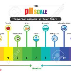 the ph scale universal indicator ph color chart diagram acidic alkaline values common substances vector illustration [ 1300 x 643 Pixel ]