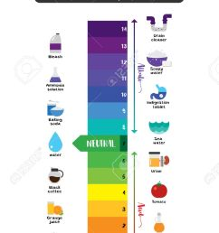 the ph scale universal indicator ph color chart diagram acidic alkaline values common substances vector illustration [ 828 x 1300 Pixel ]