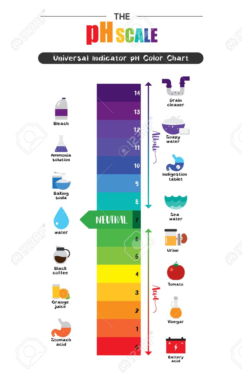 hight resolution of the ph scale universal indicator ph color chart diagram acidic alkaline values common substances vector illustration