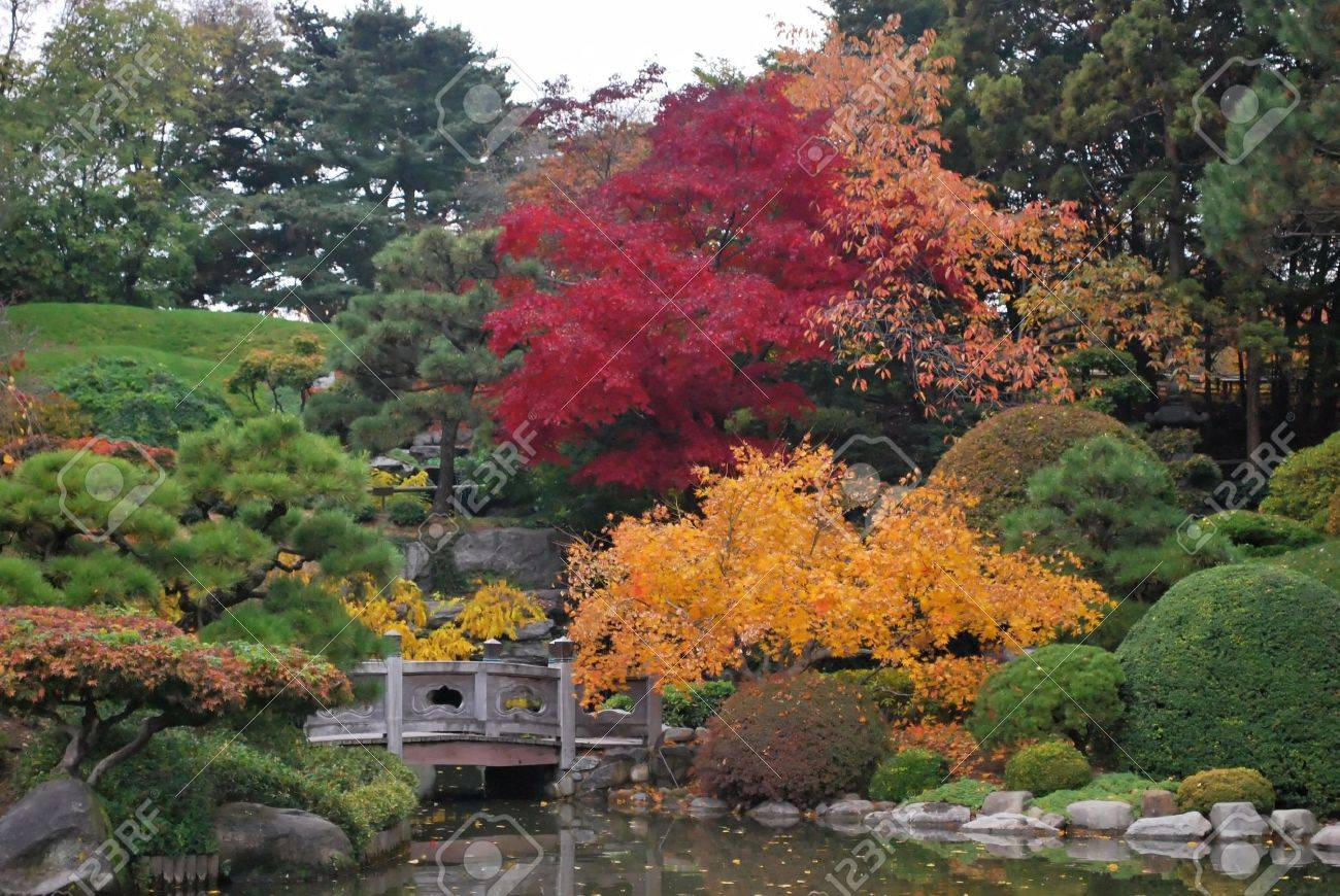 To revisit this article, visit my profile,. Bursts Of Color In Fall Foliage In Traditional Japanese Landscape Brooklyn Botanic Garden New York Stock Photo Picture And Royalty Free Image Image 3833111