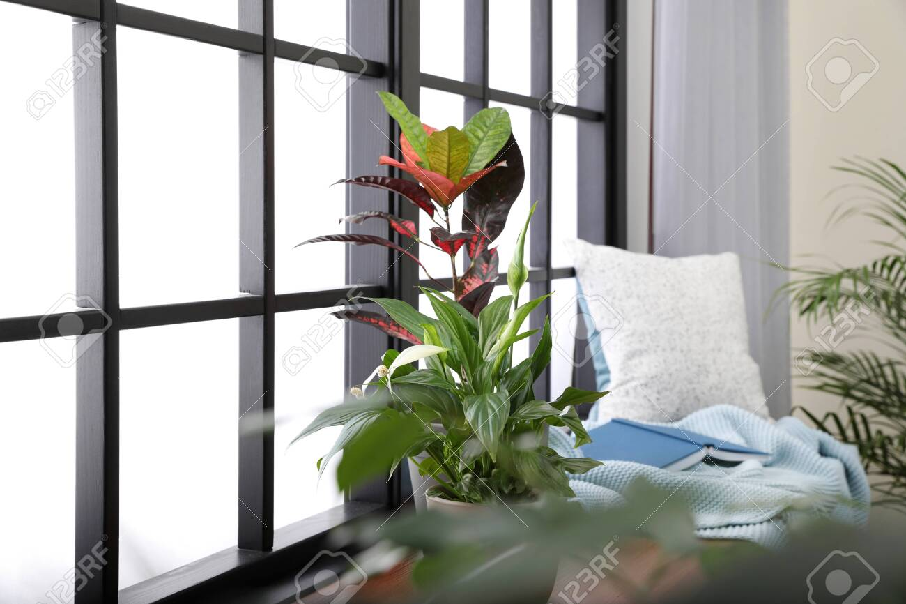 different potted plants blanket book and pillow on window sill stock photo picture and royalty free image image 124988660