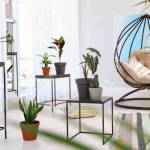 Living Room Interior With Swing Chair And Indoor Plants Trendy