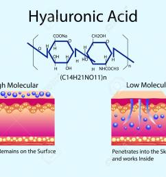 vector vector illustration with hyaluronic acid in skin care products low molecular and high molecular  [ 1300 x 965 Pixel ]