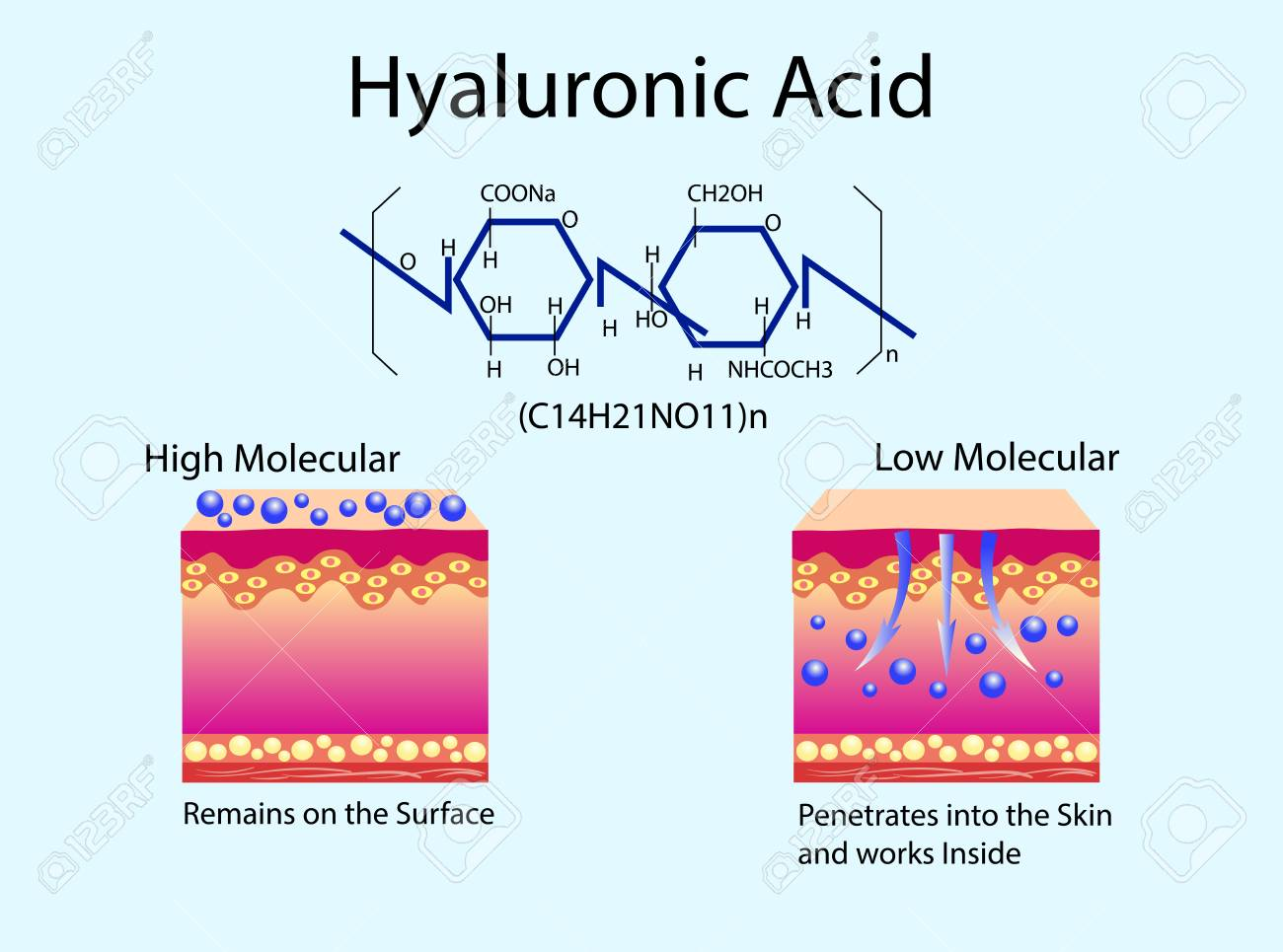 hight resolution of vector vector illustration with hyaluronic acid in skin care products low molecular and high molecular
