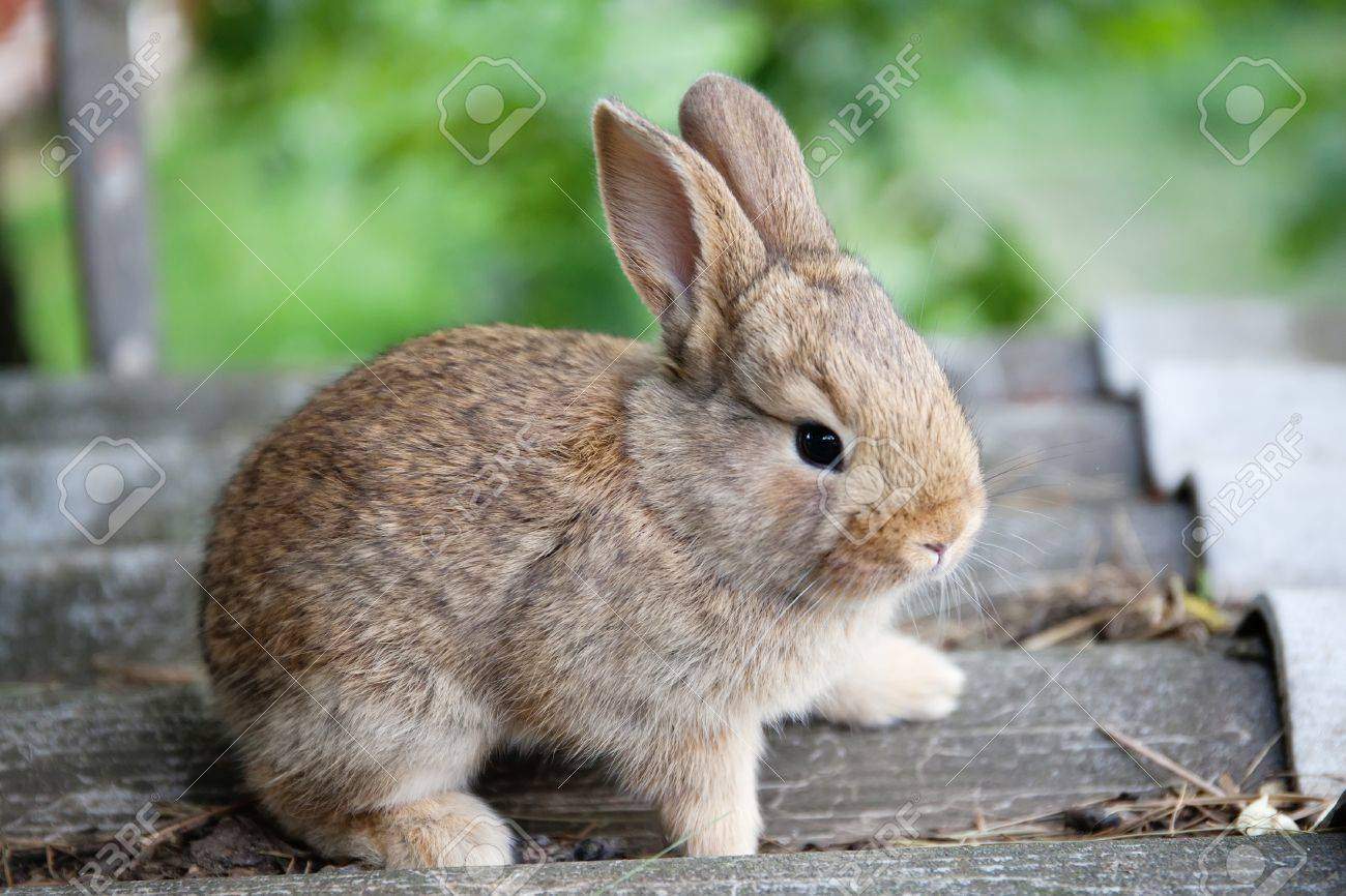 small cute rabbit funny