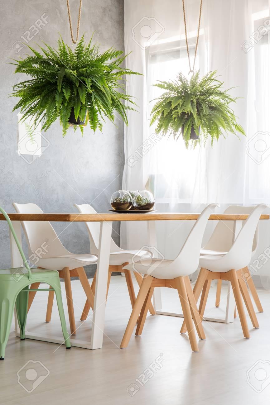 fougeres au dessus de table en bois avec des chaises blanches et de menthe dans une chambre a cafe interieure lumineux banque d images et photos libres de droits image 88845716