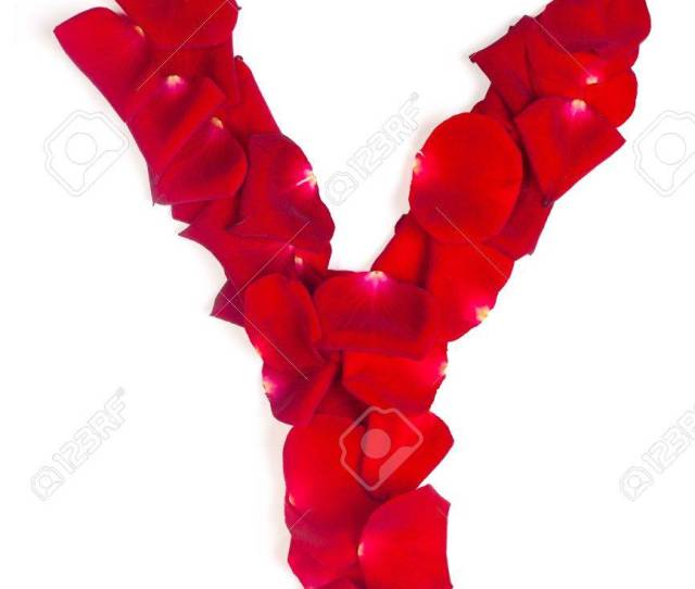 Alphabet Letter Y Made From Red Petals Rose Isolated On A White Background Stock Photo