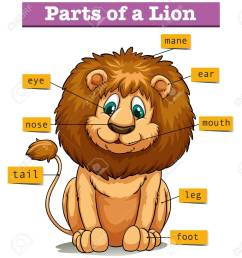 diagram showing parts of lion illustration stock vector 60454210 [ 1175 x 1300 Pixel ]