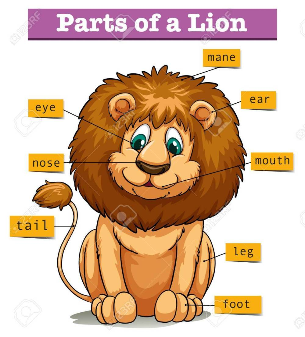 medium resolution of diagram showing parts of lion illustration stock vector 60454210