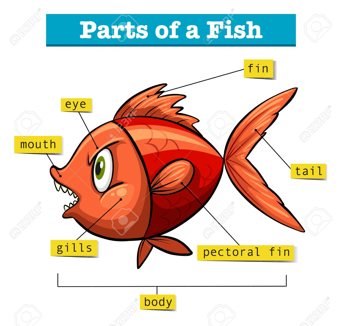 hight resolution of diagram showing parts of fish illustration stock vector 60629733