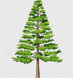 pine tree on transparent background illustration stock vector 78000092 [ 956 x 1300 Pixel ]