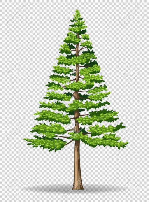 small resolution of pine tree on transparent background illustration stock vector 78000092