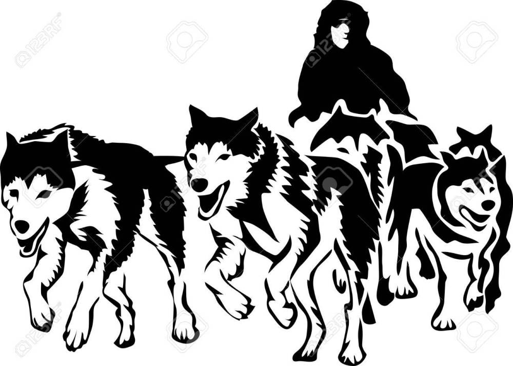 medium resolution of musher with sled dogs stock vector 88393520