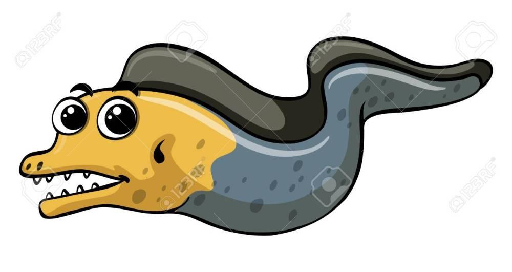 medium resolution of eell on white background illustration stock vector 82682009