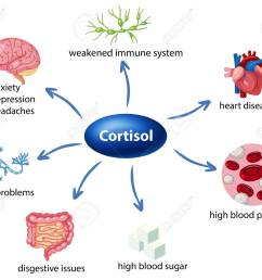 the role of cortisol in the body diagram illustration stock vector 103748544 [ 1300 x 1093 Pixel ]