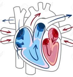 blood flow of the heart diagram illustration stock vector 103619619 [ 1300 x 1142 Pixel ]