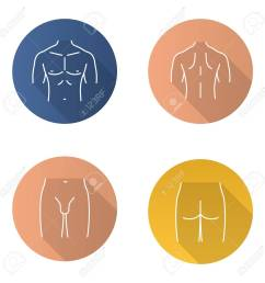 male body parts flat linear long shadow icons set muscular chest back groin [ 1300 x 1300 Pixel ]
