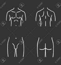 male body parts chalk icons set muscular chest back groin butt  [ 1300 x 1300 Pixel ]