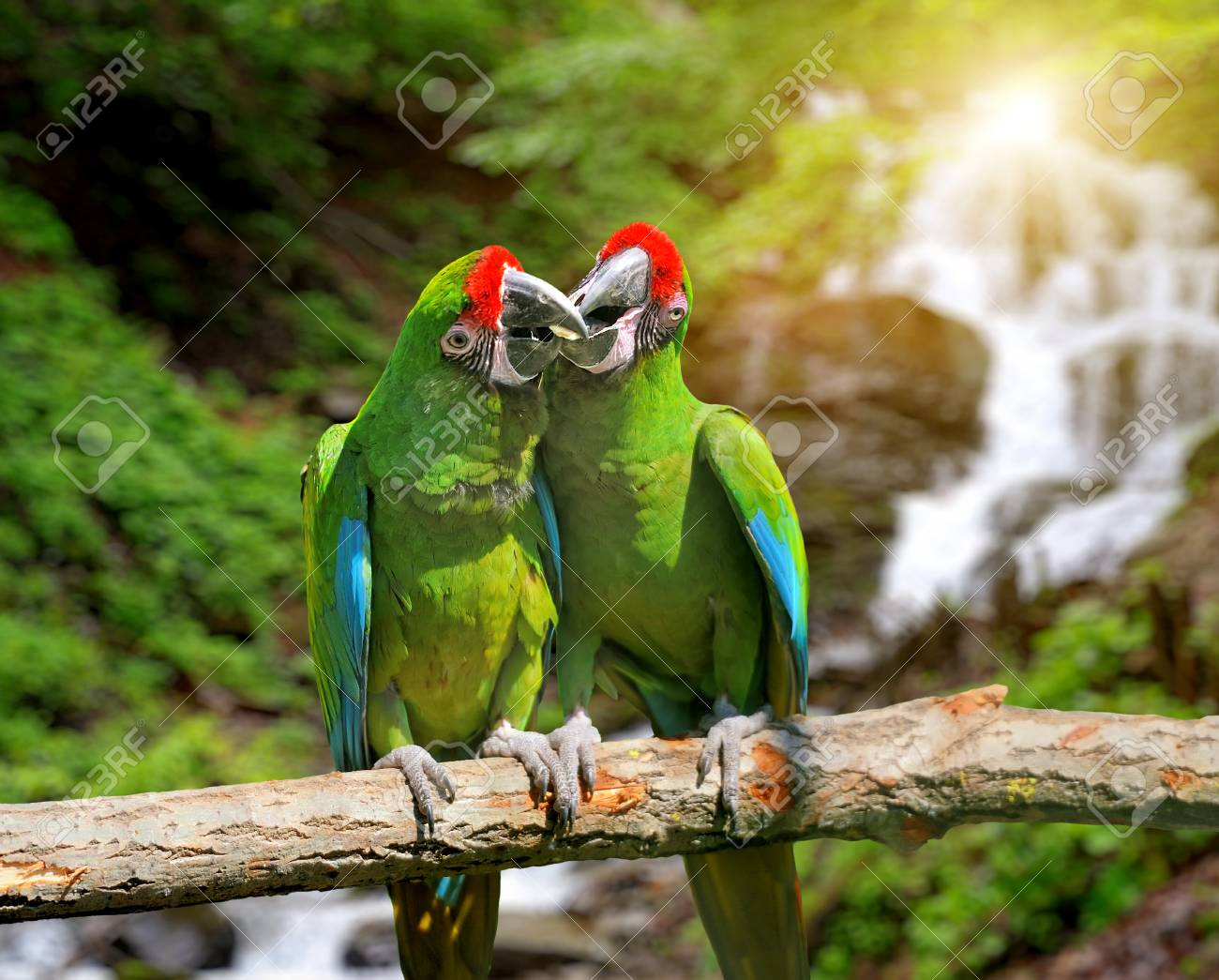 green parrot severe macaw