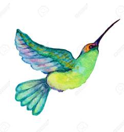 decorative watercolor colibri bird clipart design element can be used for cards invitations [ 1300 x 1251 Pixel ]