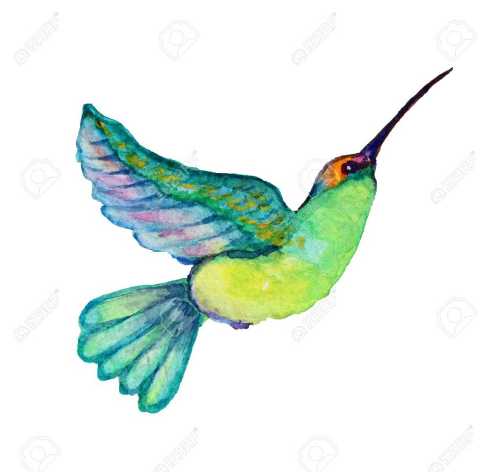 medium resolution of decorative watercolor colibri bird clipart design element can be used for cards invitations
