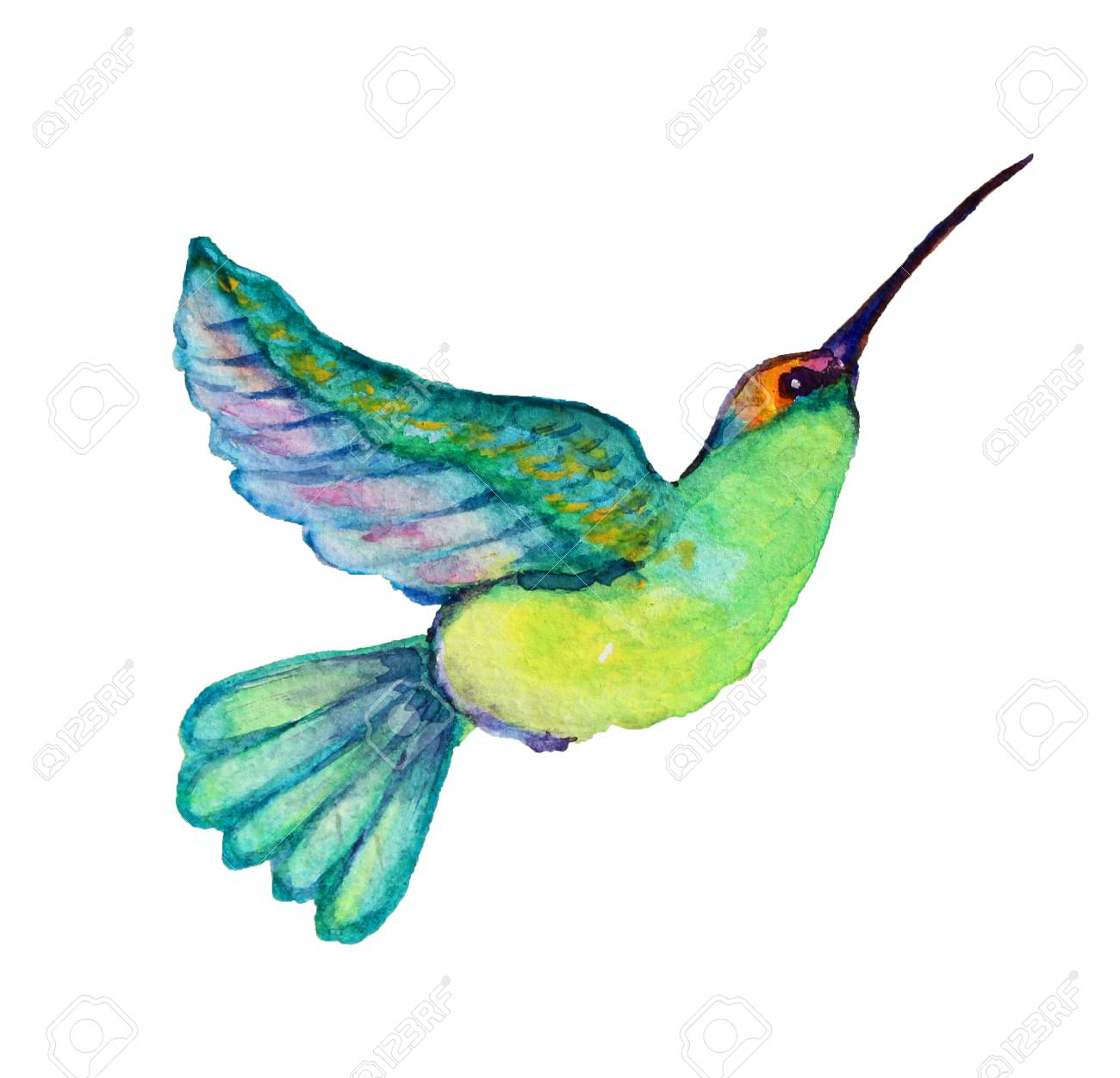 hight resolution of decorative watercolor colibri bird clipart design element can be used for cards invitations