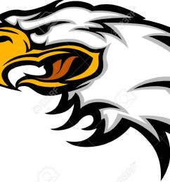 eagle mascot head graphic stock vector 10311673 [ 1300 x 861 Pixel ]