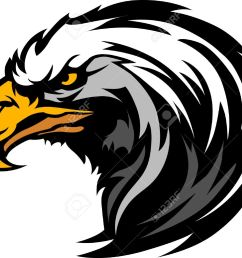 graphic head of an eagle mascot stock vector 10457685 [ 1300 x 1050 Pixel ]