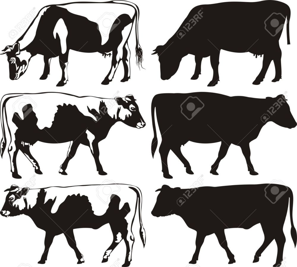 medium resolution of cow and bull silhouettes