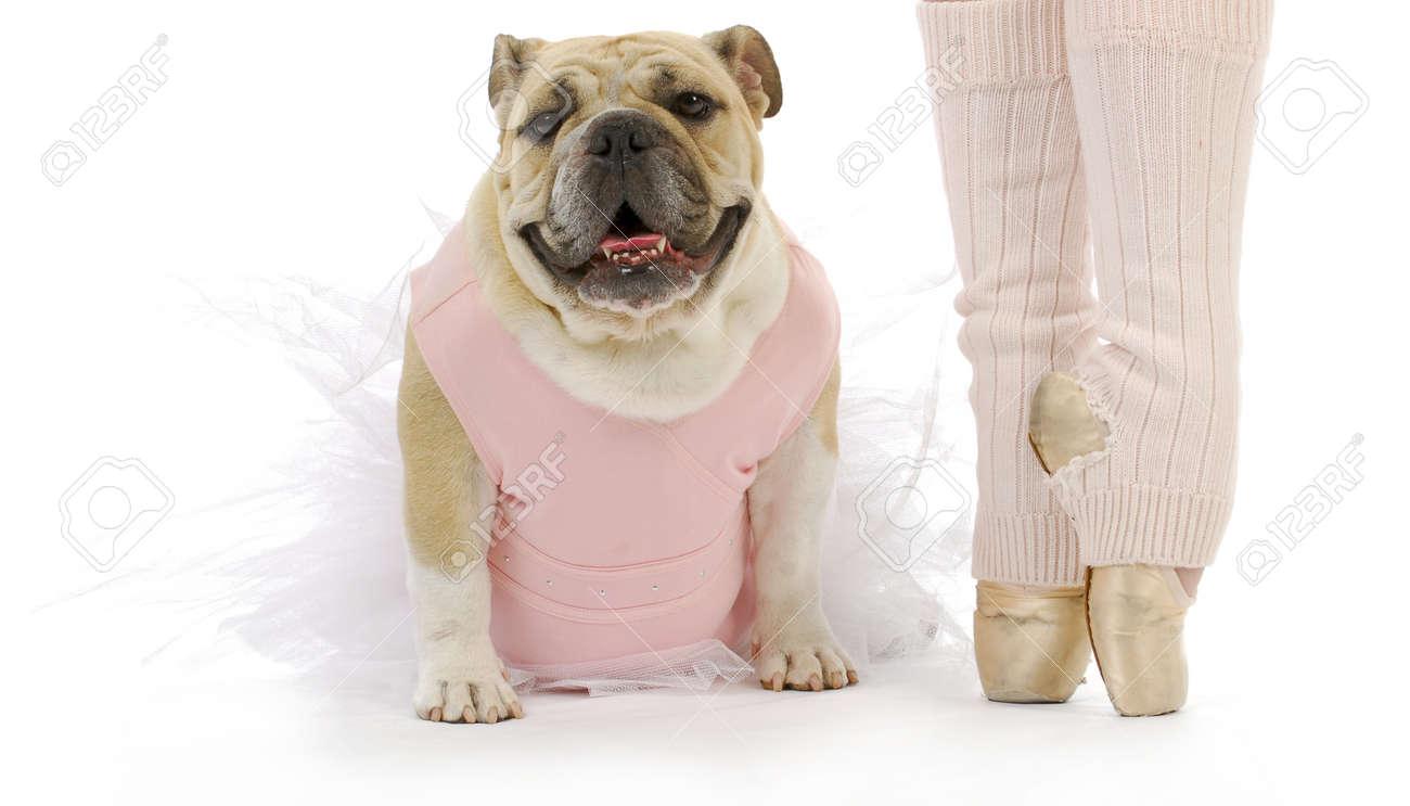 Dancing Dog English Bulldog In Tutu Sitting Beside Ballerina Stock Photo 16693599