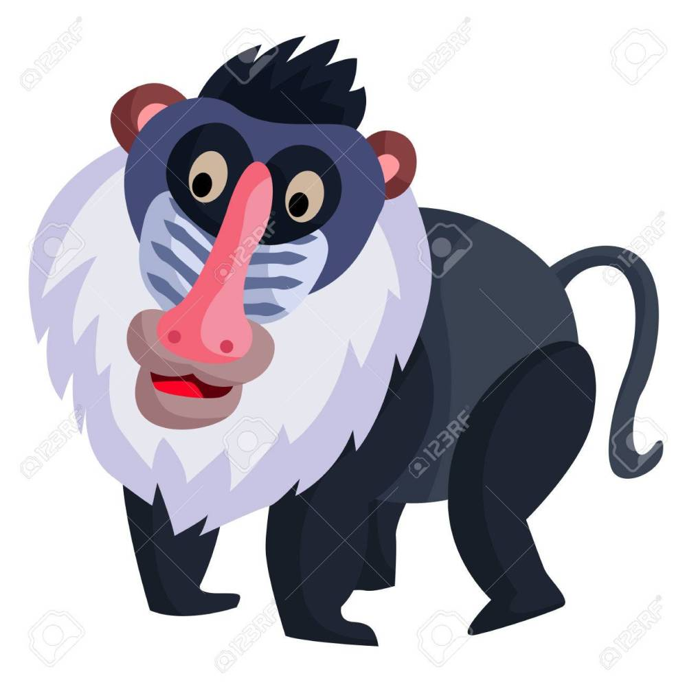 medium resolution of baboon stock vector 32010133