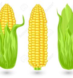 ears of ripe corn agricultural reaped crop illustration stock vector 4755731 [ 1300 x 1118 Pixel ]