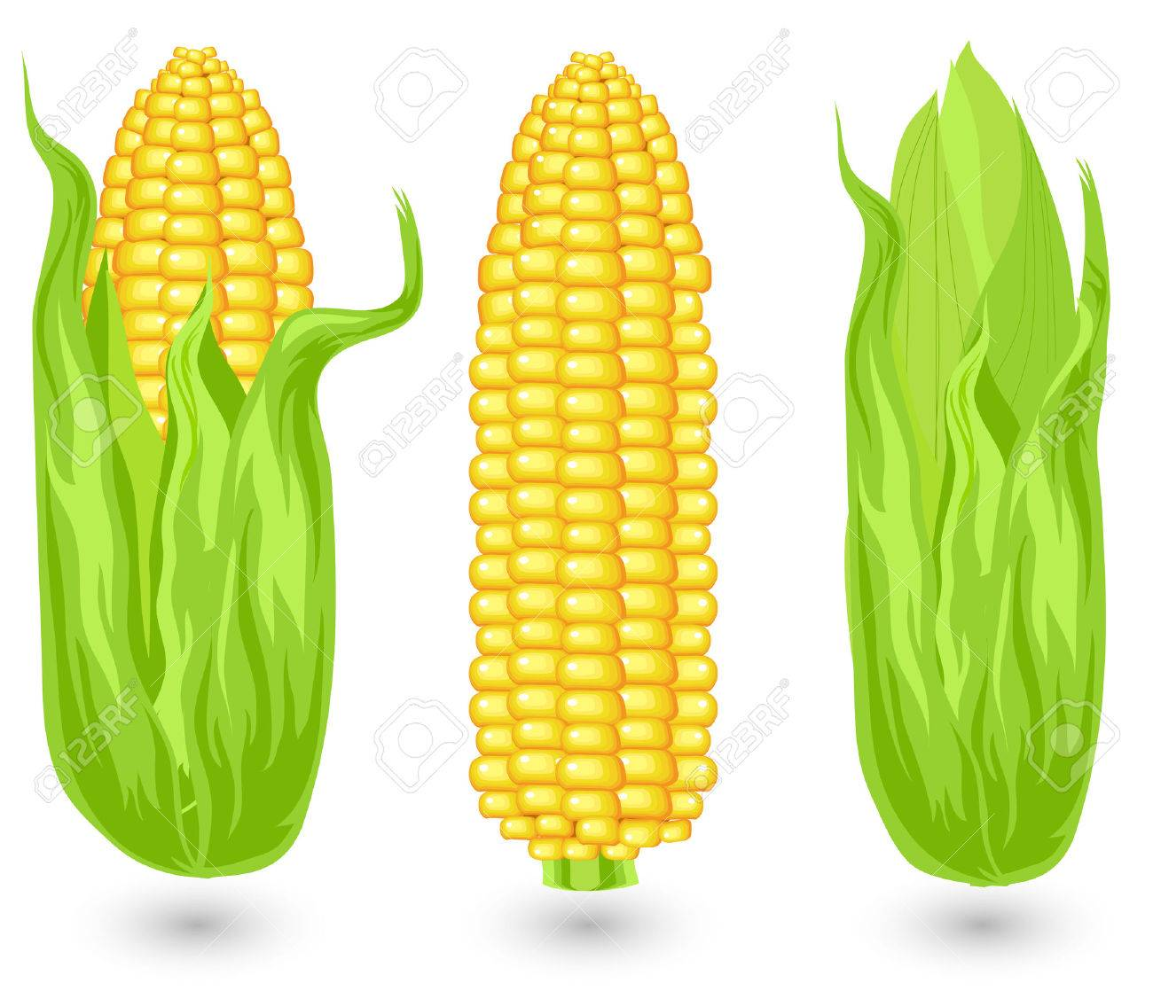 hight resolution of ears of ripe corn agricultural reaped crop illustration stock vector 4755731