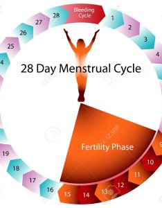 An image of  menstrual cycle chart stock vector also royalty free cliparts vectors rh rf