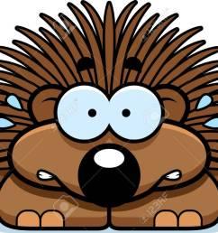 a cartoon illustration of a little porcupine looking nervous stock vector 42751061 [ 1300 x 942 Pixel ]