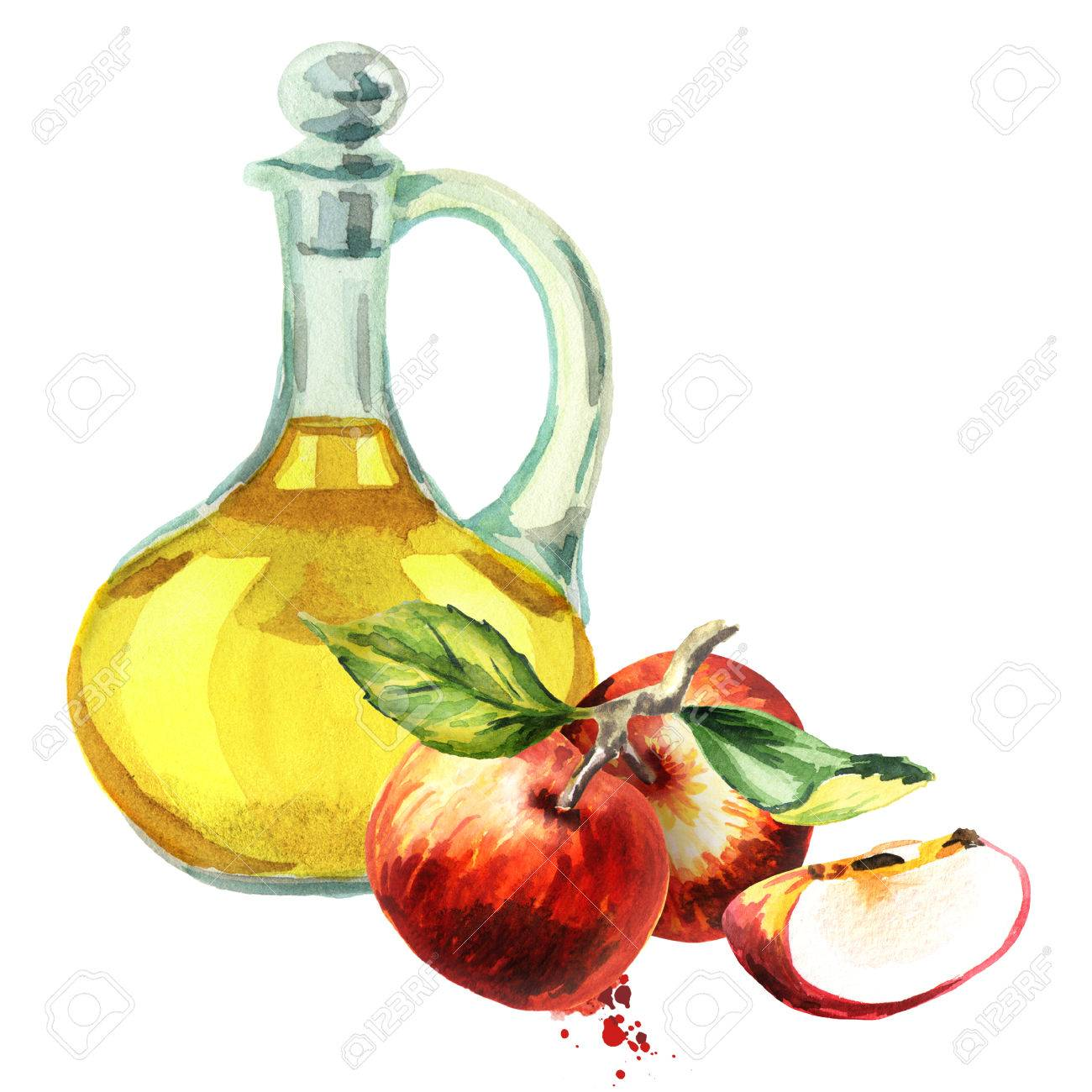 hight resolution of apple cider vinegar watercolor hand drawn illustration stock photo